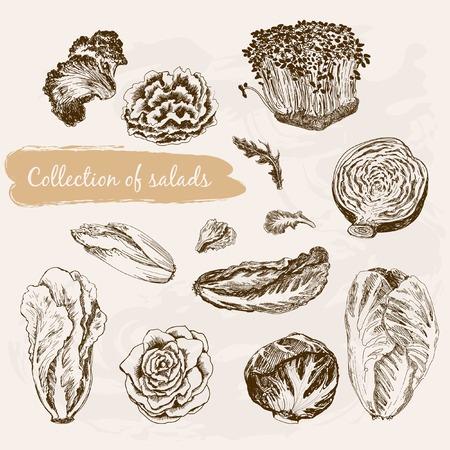 ensalada de verduras: Colecci�n de ensaladas Vectores