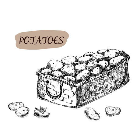 root vegetables: Potatoes. Set of hand drawn graphic illustration.