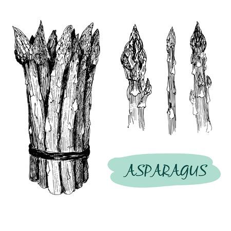 Asperges. Set van hand getekende grafische illustraties