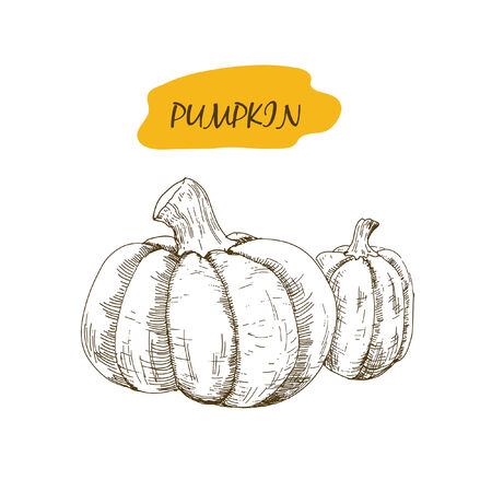 pumpkin seeds: Pumpkin. Set of hand drawn graphic illustrations