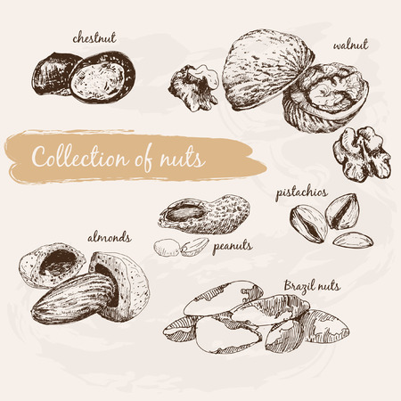 brazil nut: Collection of nuts Illustration