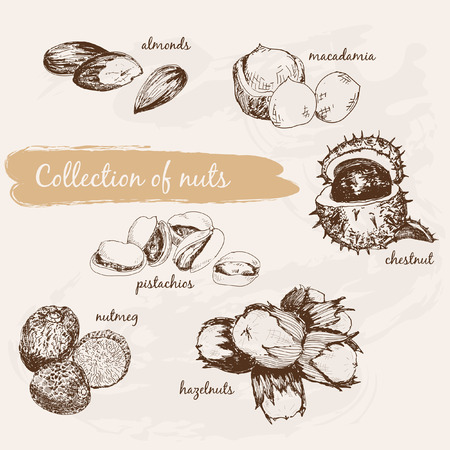 macadamia: Collection of nuts Illustration