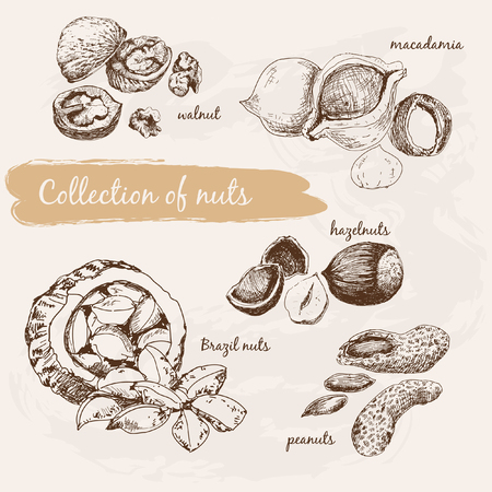 spines: Collection of nuts Illustration