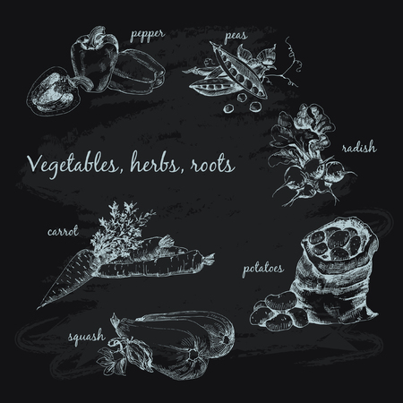 Vegetables, herb and roots. Vector