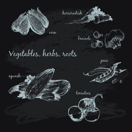erva: Legumes, ervas e ra Ilustração