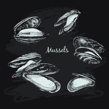 ムール貝のスケッチ図  イラスト・ベクター素材