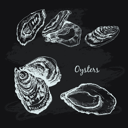 Oysters hand draw illustration