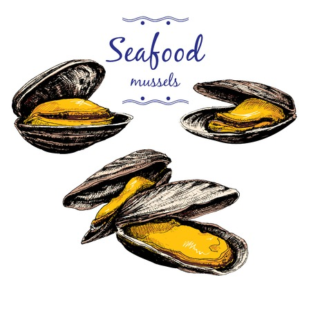 Seafood. Mussels. Vector