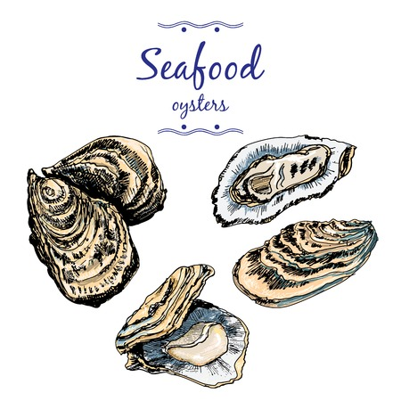 Oysters. Illustration