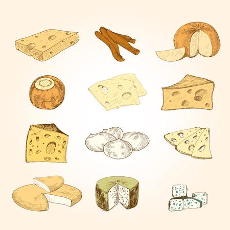 edam: Cheese collection. Illustration