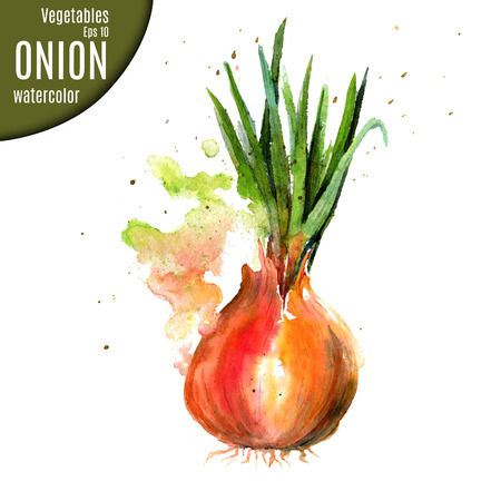 potherb: Onion. Watercolor.