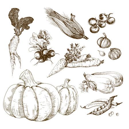 Groenten, collectie Stock Illustratie