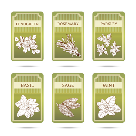 thyme: Collection of herbs. Hand drawn graphic illustrations. Set of labels with different herbs and spicy.