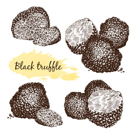 Zwarte truffels groep en plakken die op wit, het knippen inbegrepen weg Stock Illustratie
