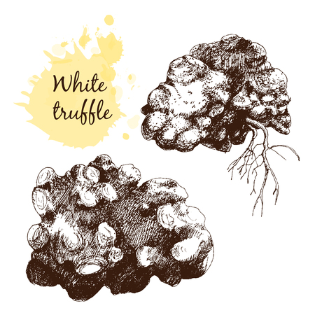 french fancy: White truffles group isolated on white. Hand drawn graphic  illustration in sketch style