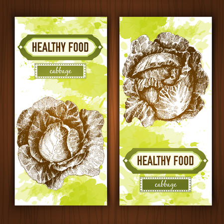 lithograph: Banners with graphic cabbage. Hand drawn graphic illustration on watercolor background Illustration