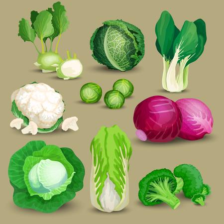 repollo: Hortalizas, instituido con brócoli, coles y otras coles diferentes. Hortalizas, instituido con la col, el brócoli, coles, col rizada, rojo, chino, napa y las coles de Bruselas Vectores