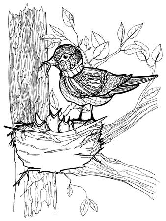 oiseau dessin: Coloriage avec des oiseaux et poussins dans le nid