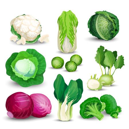 Plantaardige set met broccoli, koolrabi en andere verschillende koolsoorten. Plantaardige set met kool, broccoli, spruitjes, koolrabi, savooiekool, rood, chinees, Napa en spruitjes op een witte achtergrond.