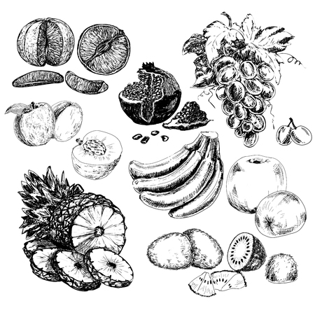 orange fruit: Fruits collection. Set of hand drawn graphic illustration in sketch style. Ink food illustrations with grapes, bananas, kiwi and other fruits