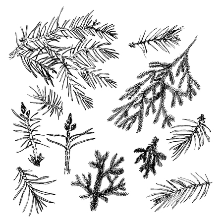 pine boughs: Elegant collection with hand drawn graphic pines and fir needles.