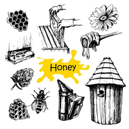 Hand drawn honey set presentation