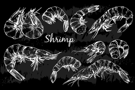 Seafood collection. Shrimp
