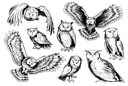 Collection of hand drawn owls in sketch style.