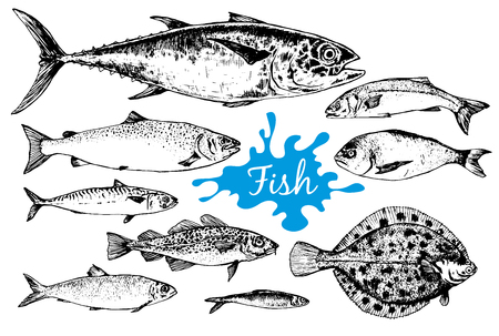 Seafood collection. Hand drawn set with tuna, dorado, mackerel and other different sea fish in sketch style Ilustrace
