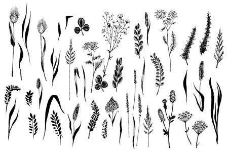 Wild herbs and flowers painted black line.