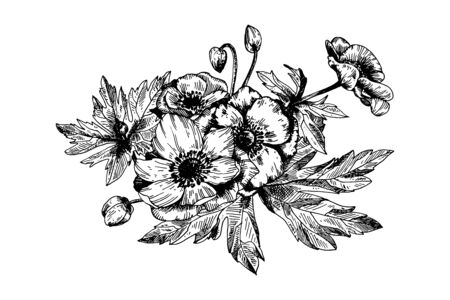Flores botánicas florales de anémona.