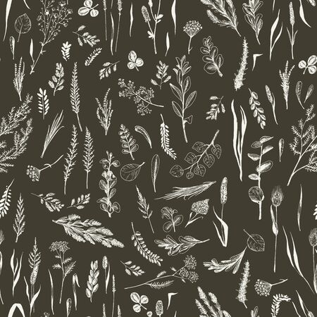Wild herbs and flowers are in seamless pattern on dark background. Field herbs are in engraving style