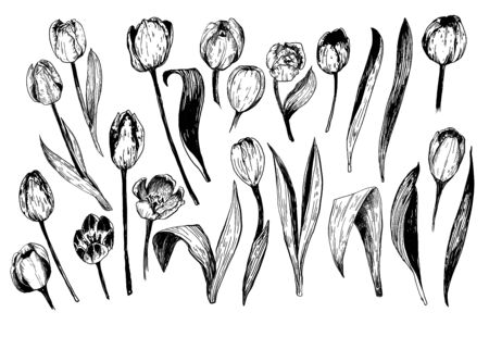 Set of spring flowers tulips branches. Ink sketch collection of illustrations Illustration