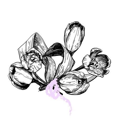 Set of spring flowers tulips branches. Pencil sketch collection illustration