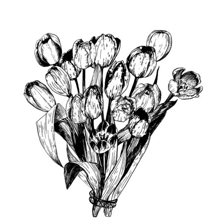 Set of spring flowers tulips branches. Pencil sketch collection vector illustration Illustration