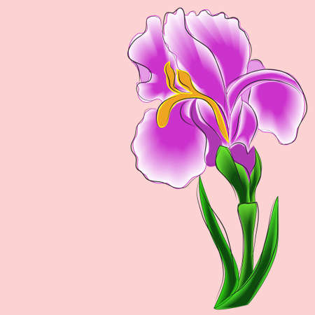 flor aislada: iris, fondo de color rosa, flor, aislado object? Vectores