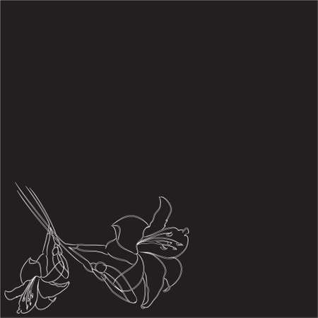 inconsolable: two flowers, lilies on a black background