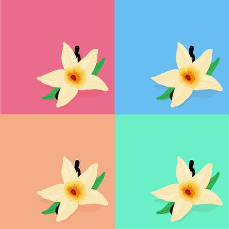 고립 된 개체: 컬러 배경, 고립 된 개체에 바닐라 꽃 일러스트