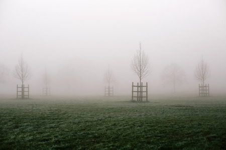 enfield: Grass and trees of Broomfield Park, London, disappearing in the fog on cold winter morning.