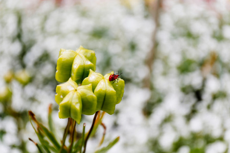 sexual intimacy: Bugs making love on a plant in a garden on a sunny day Stock Photo