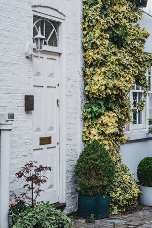Close up of a white front door by a climbing plant on a traditional mews house in London, UK, in summer.