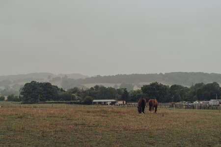 Horses grazing in a field in Cotswolds, Worcestershire, UK, on a grey rainy summer day. Zdjęcie Seryjne