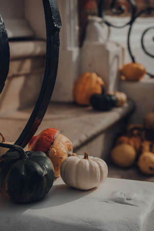 Variety of different kinds of pumpkins and squashes on the doorstep of a house, halloween decor.