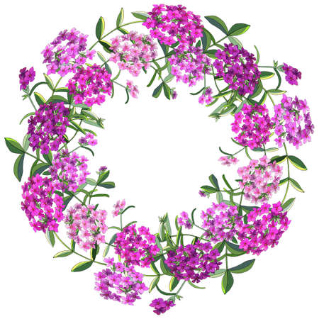 Floral wreath of phlox flowers isolated on white. Excellent print for greeting cards, clothes, fabric, gift box. Ilustracje wektorowe
