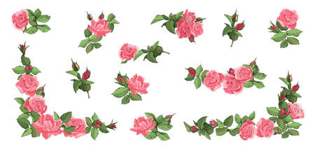 Hand drawn set of pink roses, leaves, bud and an open flower. Flower rose, green leaves.