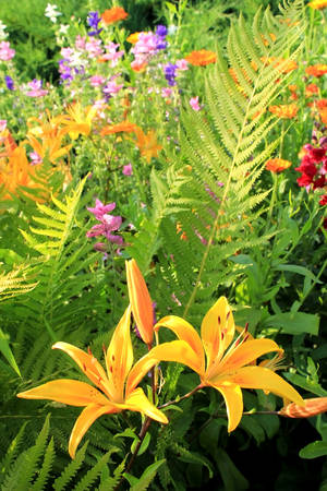 Two bright yellow lilies in fern leaves and other flowers