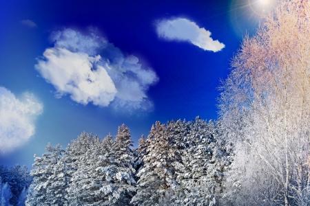 Winter Landscape Stock Photo - 16857866