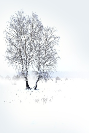 wintery day: Snowfall in the forest Stock Photo