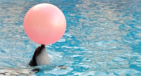 Dolphin  Inflatable ball    photo