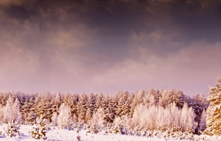 winter photos: Photos of the winter woods. Winter landscape. Stock Photo